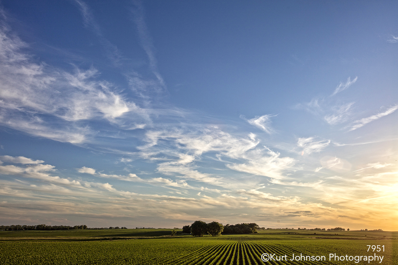 midwest green grass field blue sky country clouds sunset landscape