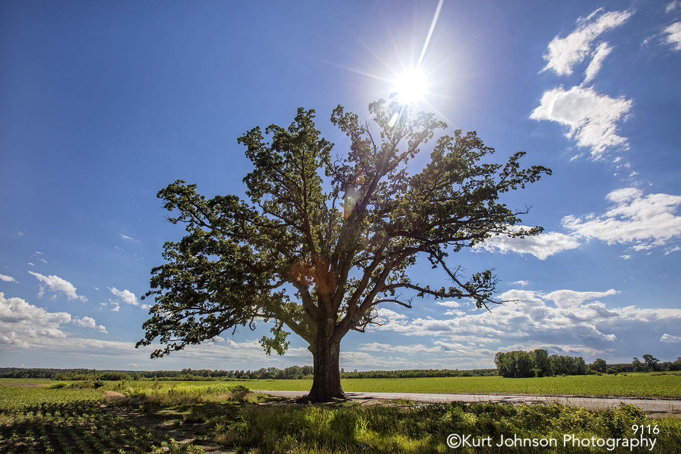 midwest tree blue sky green grass clouds sun flare field