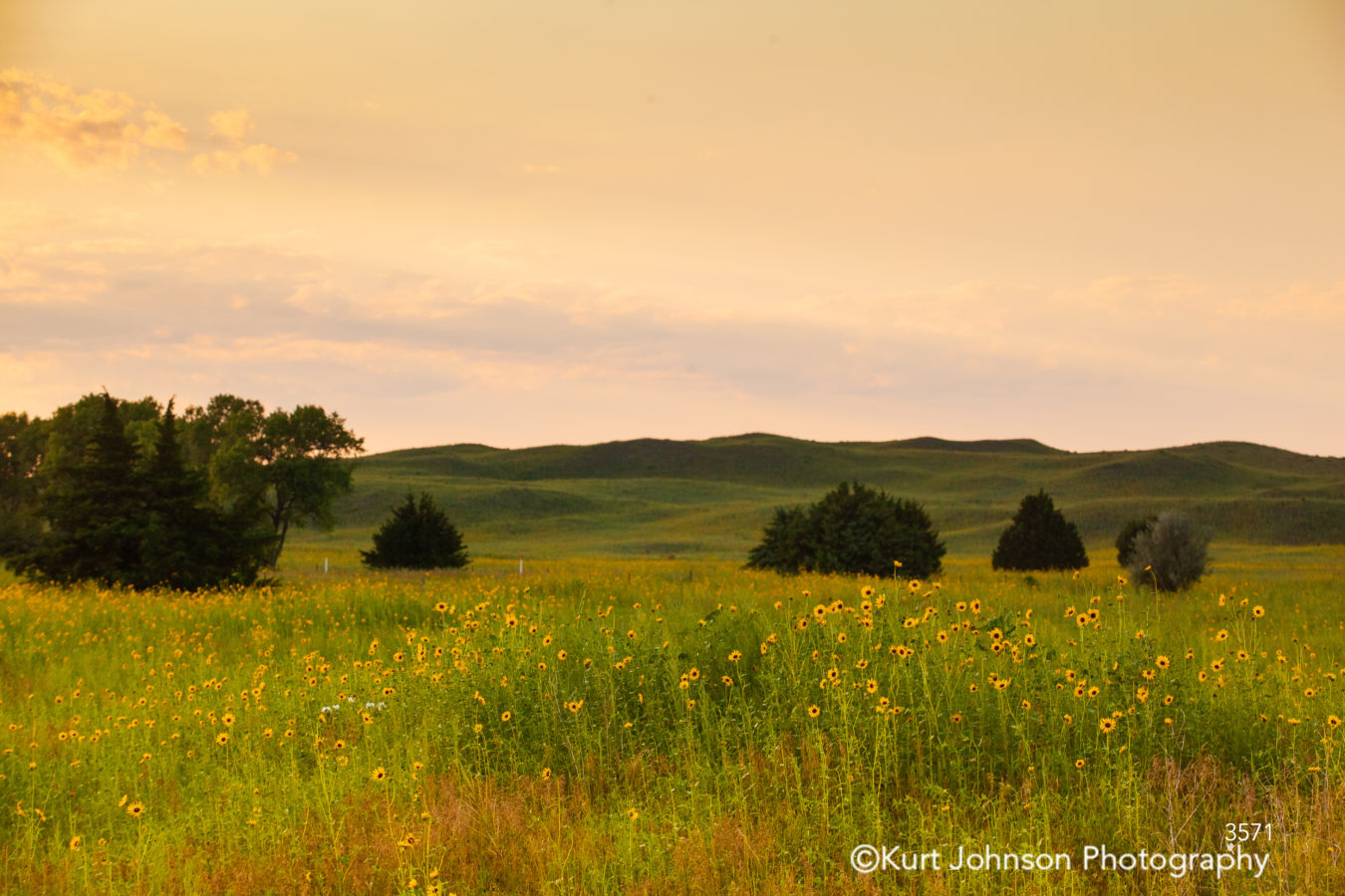 sunset field midwest wildflowers green grass country prairie landscape