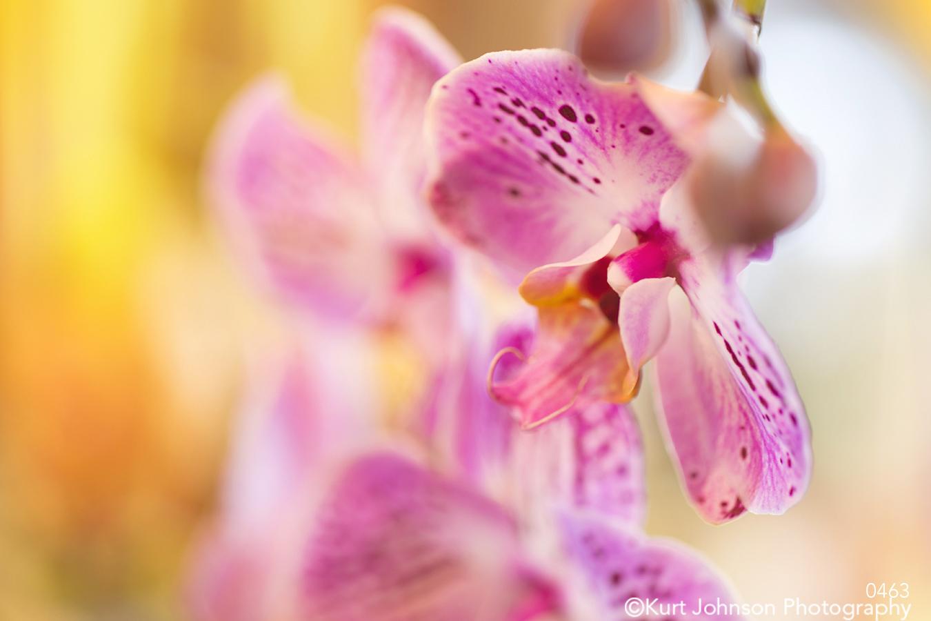 pink orchid pattern macro close up yellow