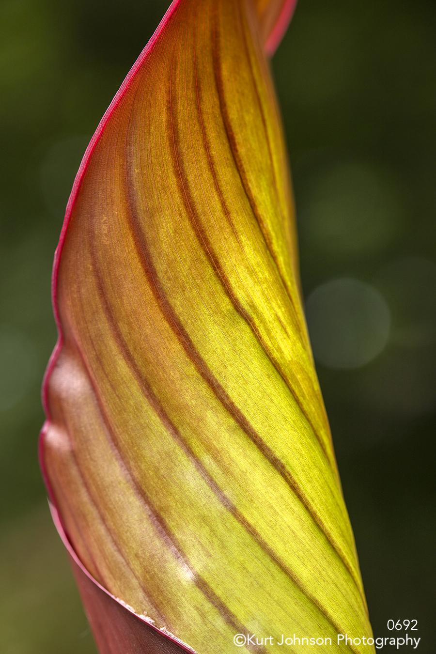 orange yellow leaf lines pattern macro close up texture