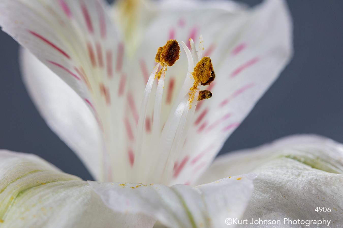 white lily pink pattern macro close up detail