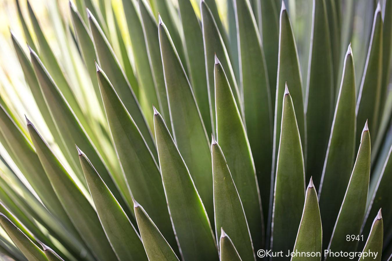 green desert leaves southwest spikes pattern succulent