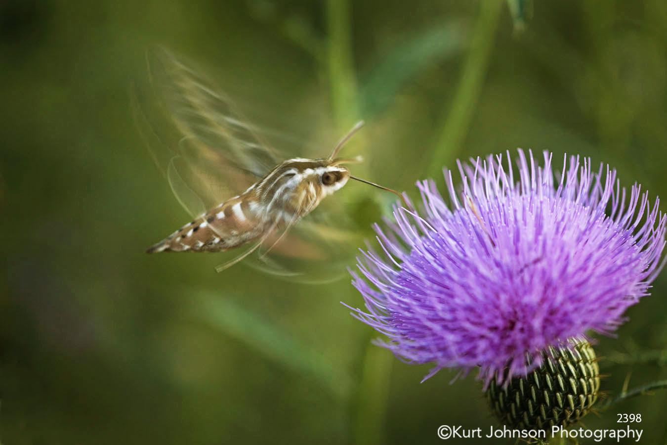 green purple flower hummingbird nature photography wildlife