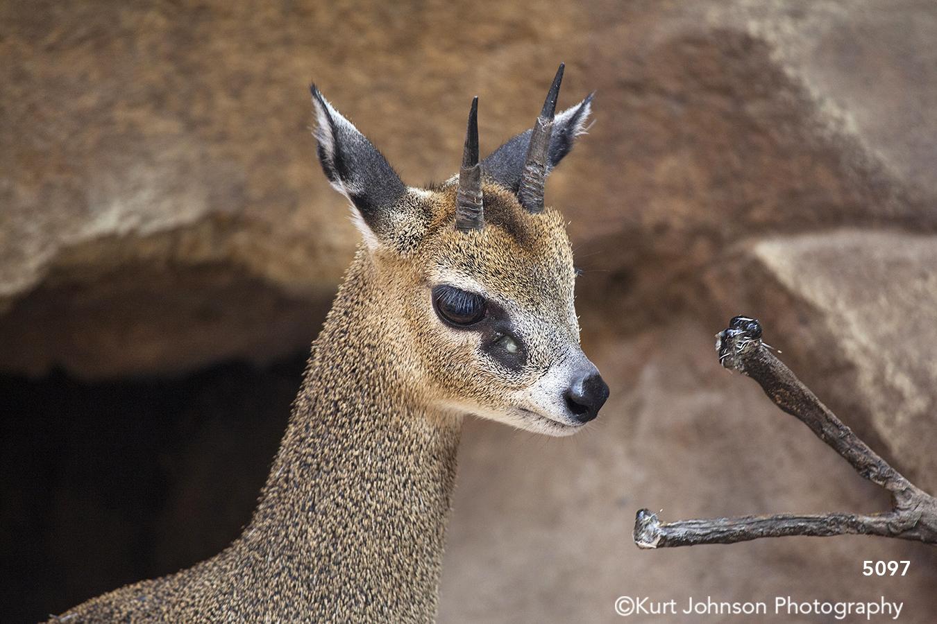 wildlife animal brown deer