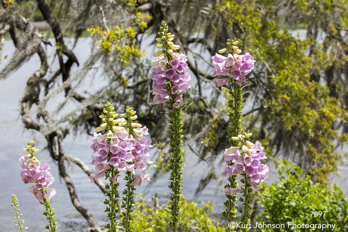 southeast charleston south carolina pink flowers water green bloom