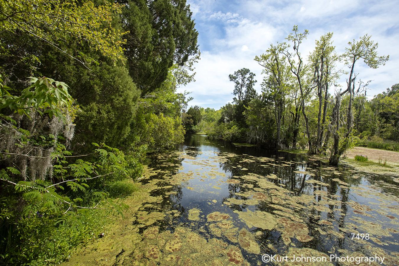 southeast charleston south carolina waterscape green swamp trees