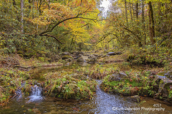 yellow green autumn fall trees water waterscape