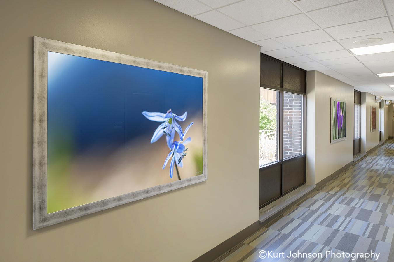 silver frame framed botanical blue violet flower art installation Wayne Nebraska midwest install