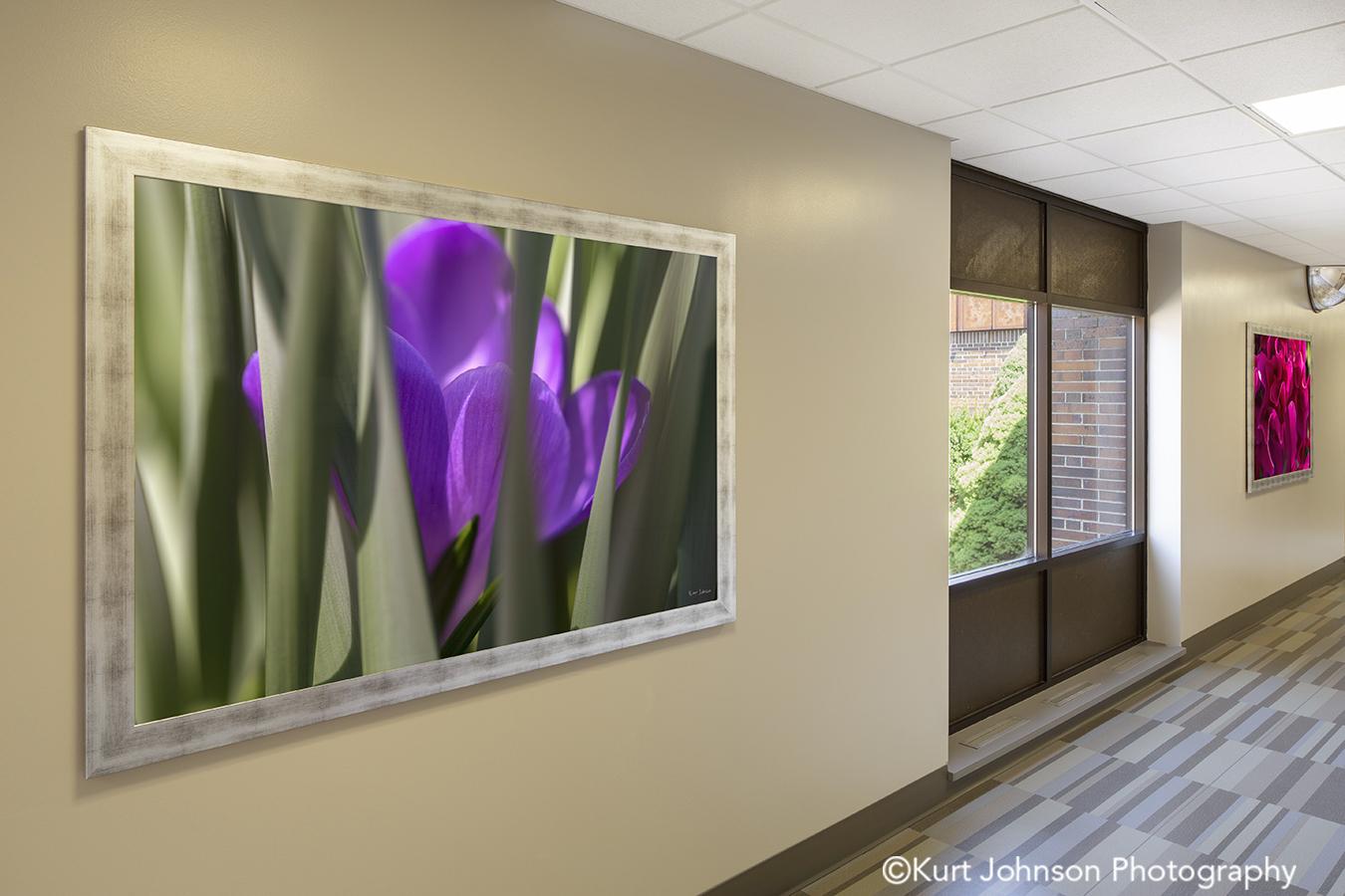 silver frame framed botanical purple violet flower art installation Wayne Nebraska midwest install