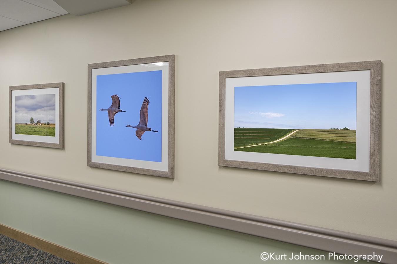 Broken Bow senior living installation framed fine art photography install midwest wildlife