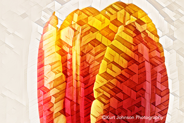 orange yellow macro tulip studio healthcare environment photography botanical