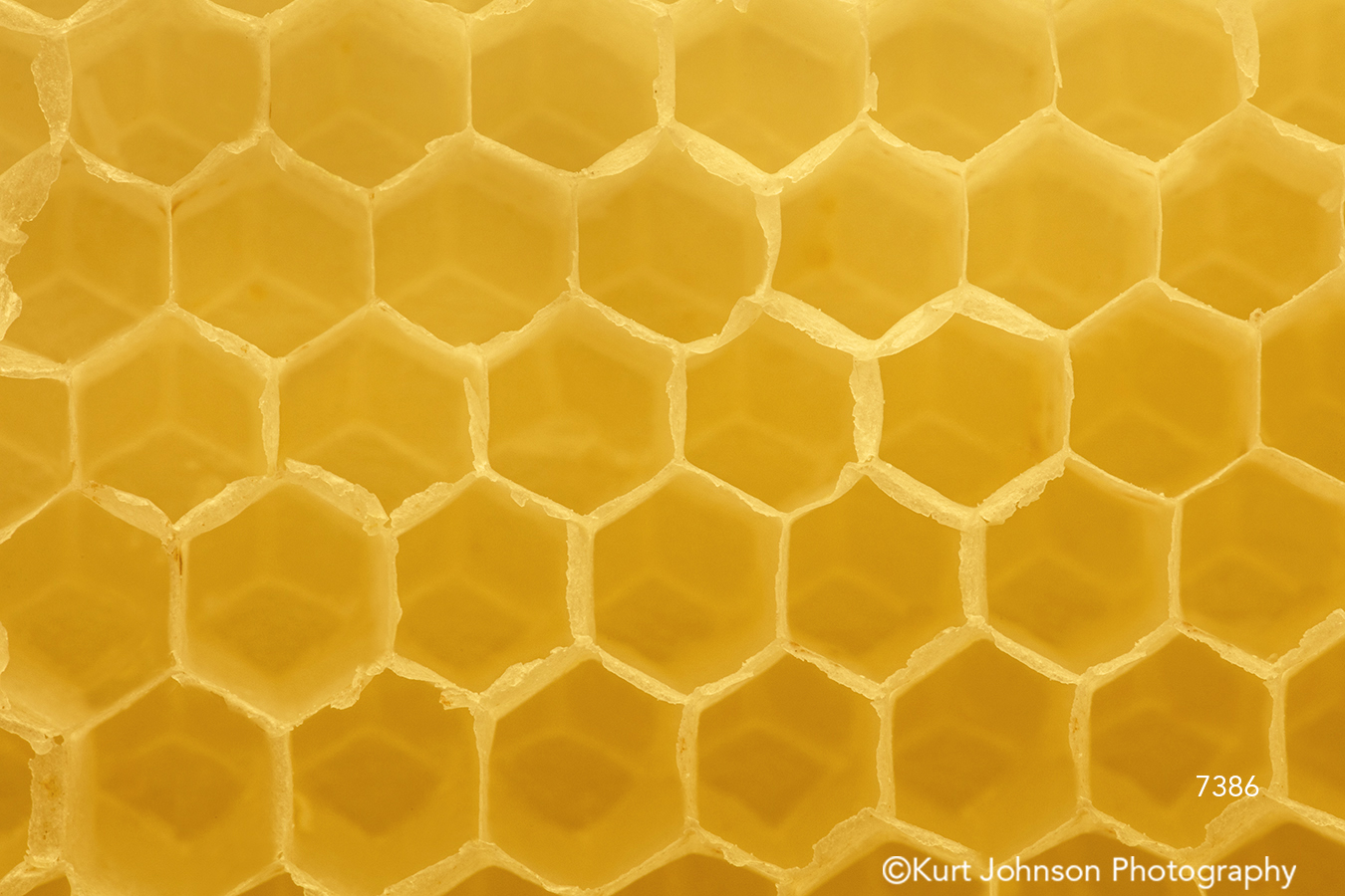 yellow texture honeycomb pattern lines shapes detail macro close up insect