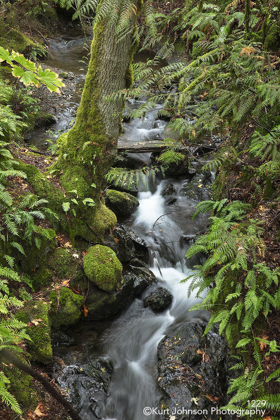 green forest running water waterfall trees leaves rocks stones moss waterscape landscape pacific northwest