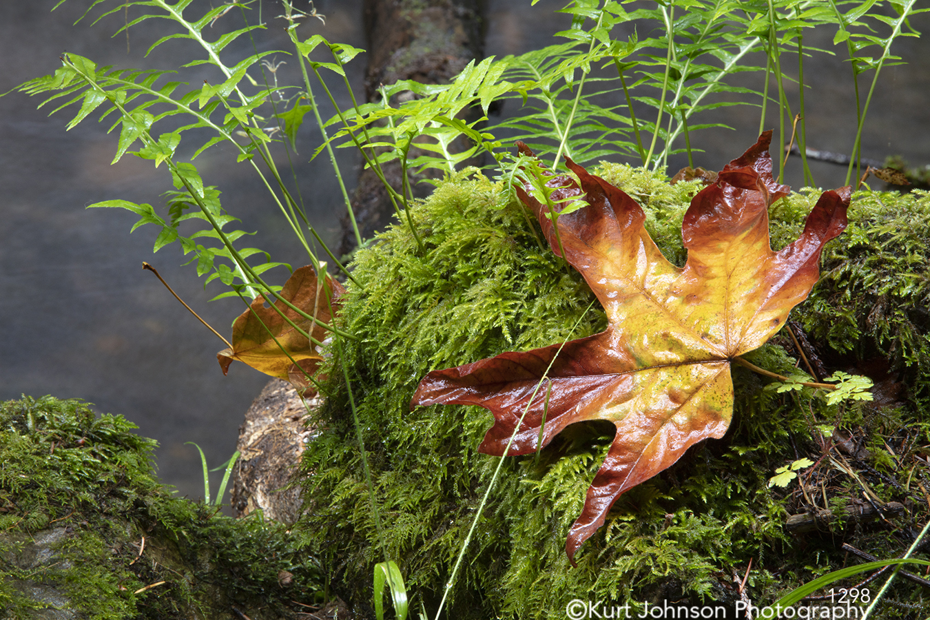 green moss leaves waterscape detail autumn fall orange yellow pacific northwest