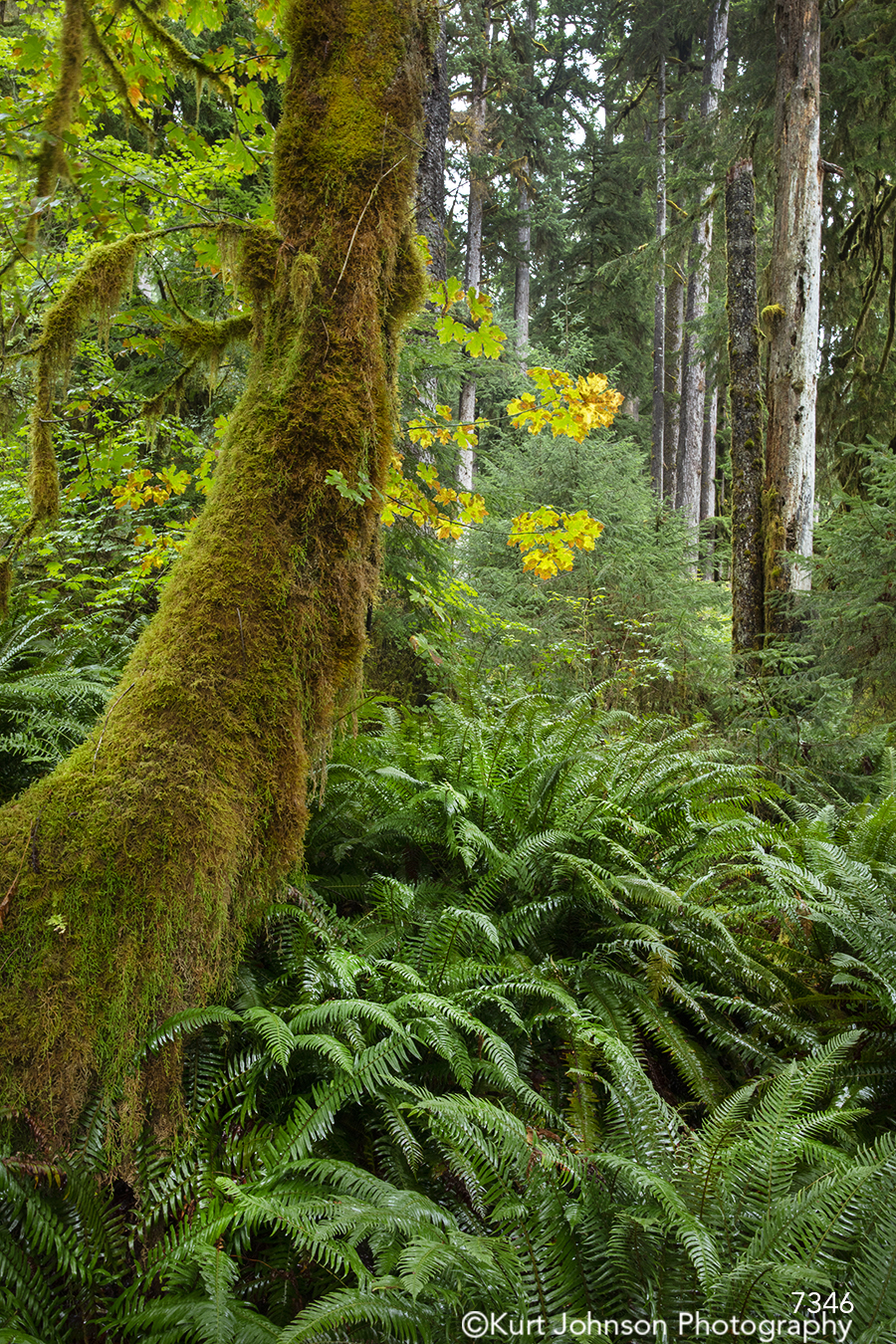 green landscape tree trees forest leaves pacific northwest woods