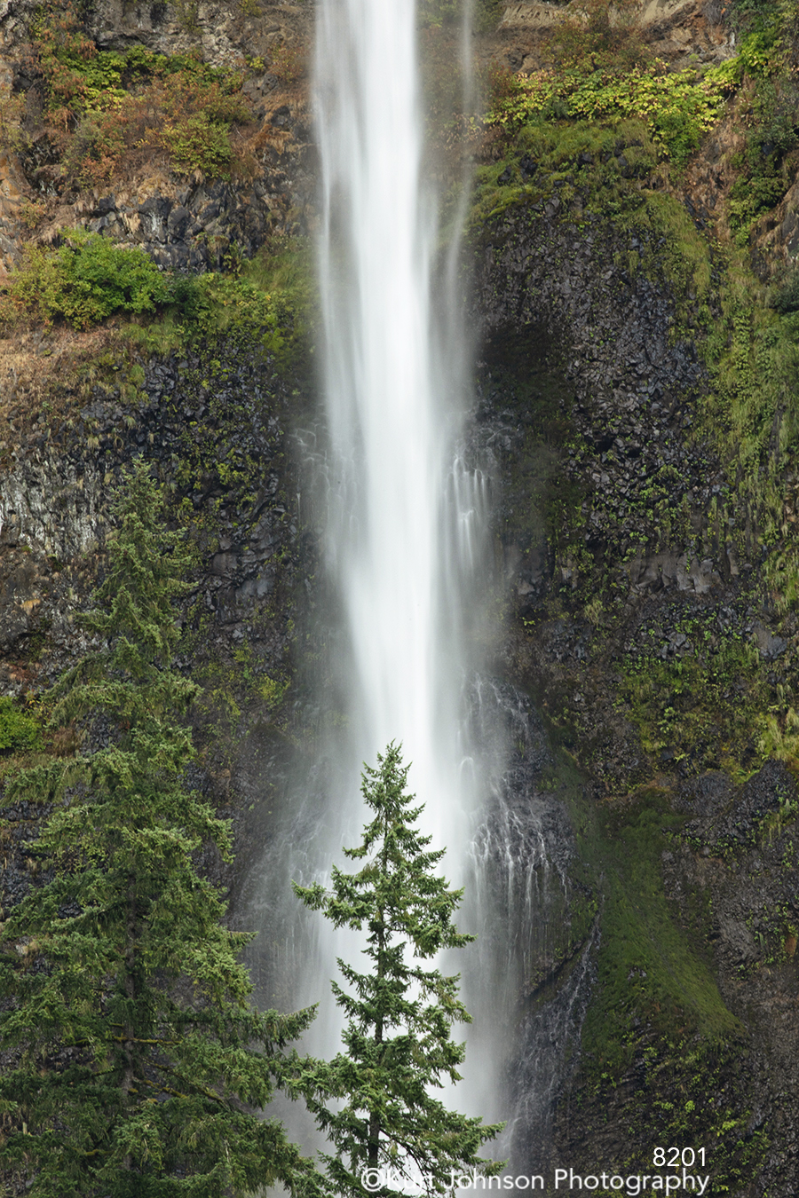 green tree trees water waterfall waterscape running stream forest pacific northwest