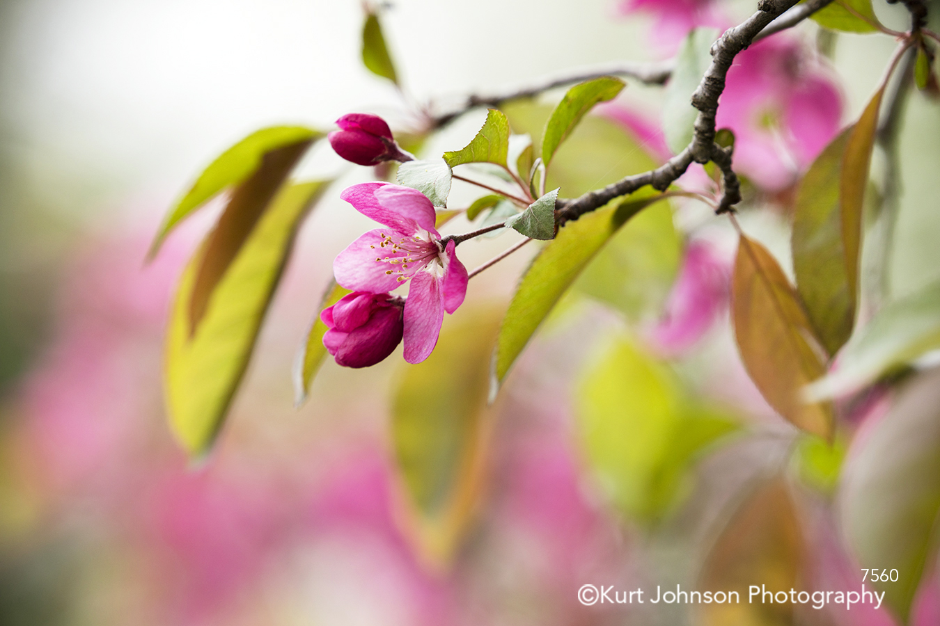 pink spring bloom flower flowers botanical leaves tree trees blossom green