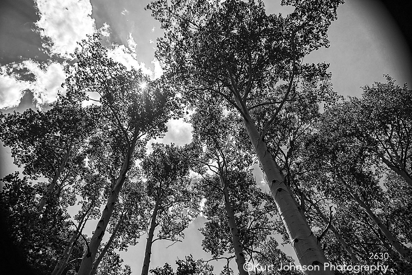 trees forest black and white sky clouds leaves