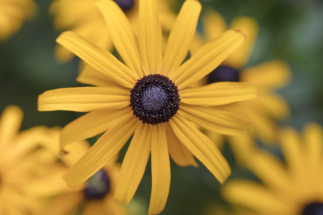 yellow flower botanical macro close up detail