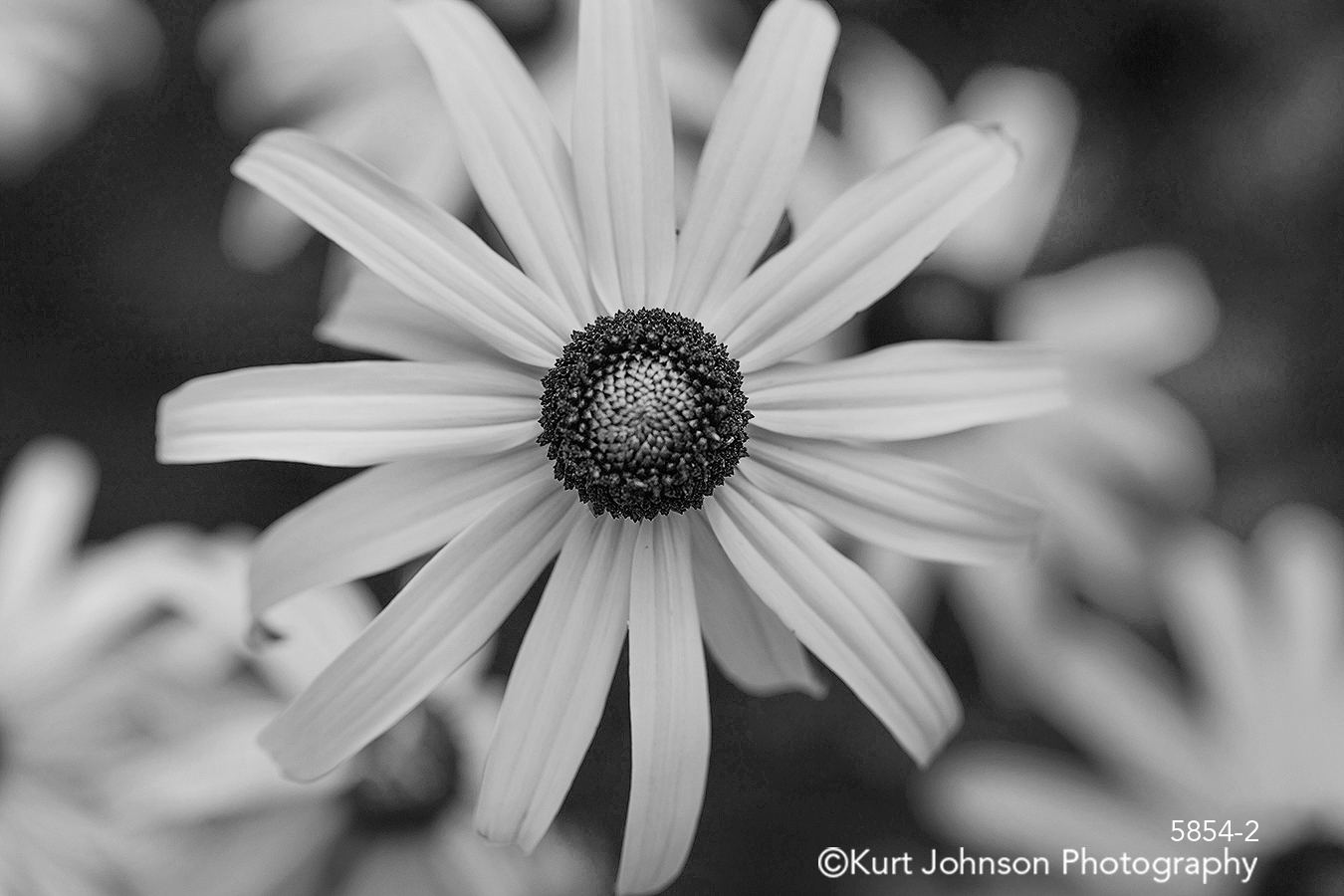 yellow flower botanical macro close up detail black and white