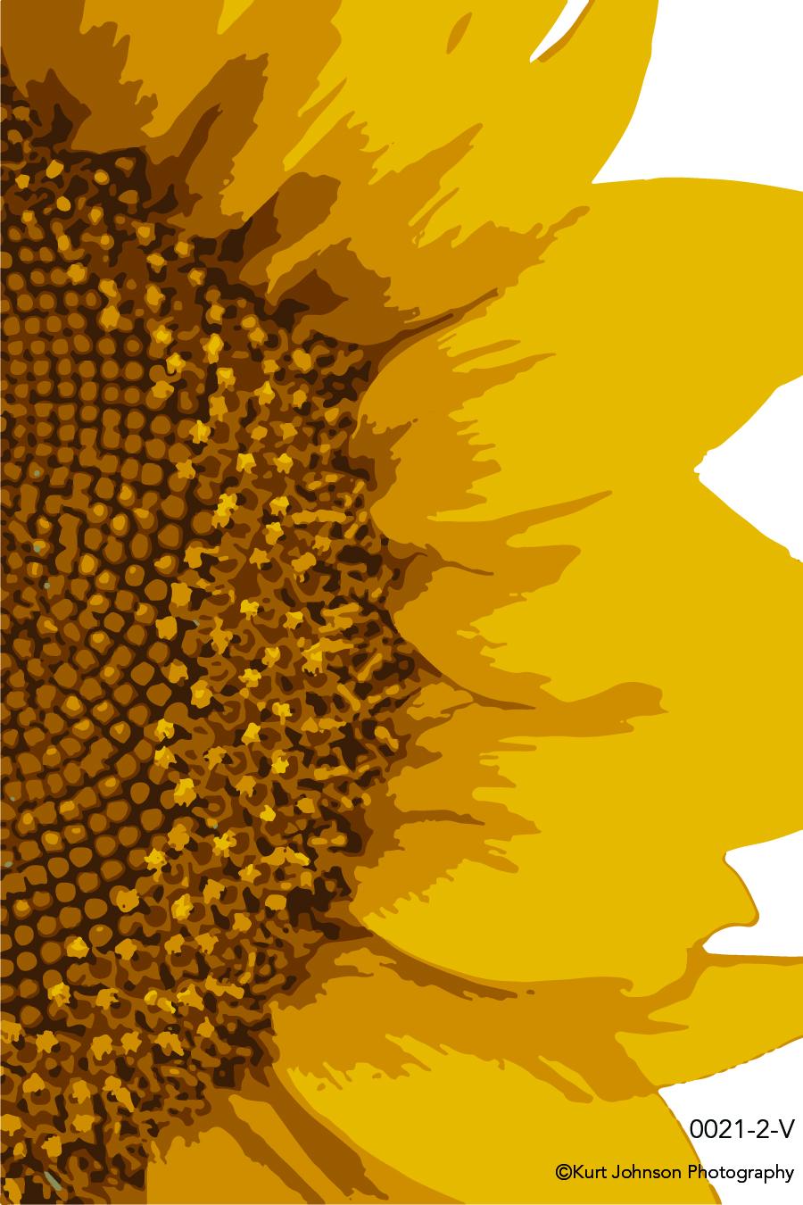 yellow flower vector petals close up detail macro sunflower botanical