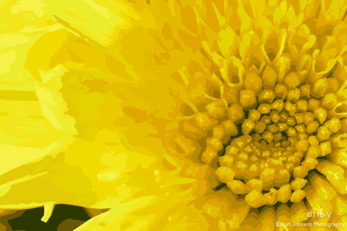 yellow flower close up detail vector