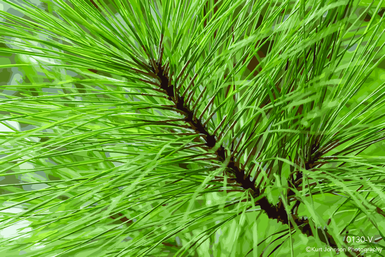 tree trees green pine needles branch close up detail forest vector