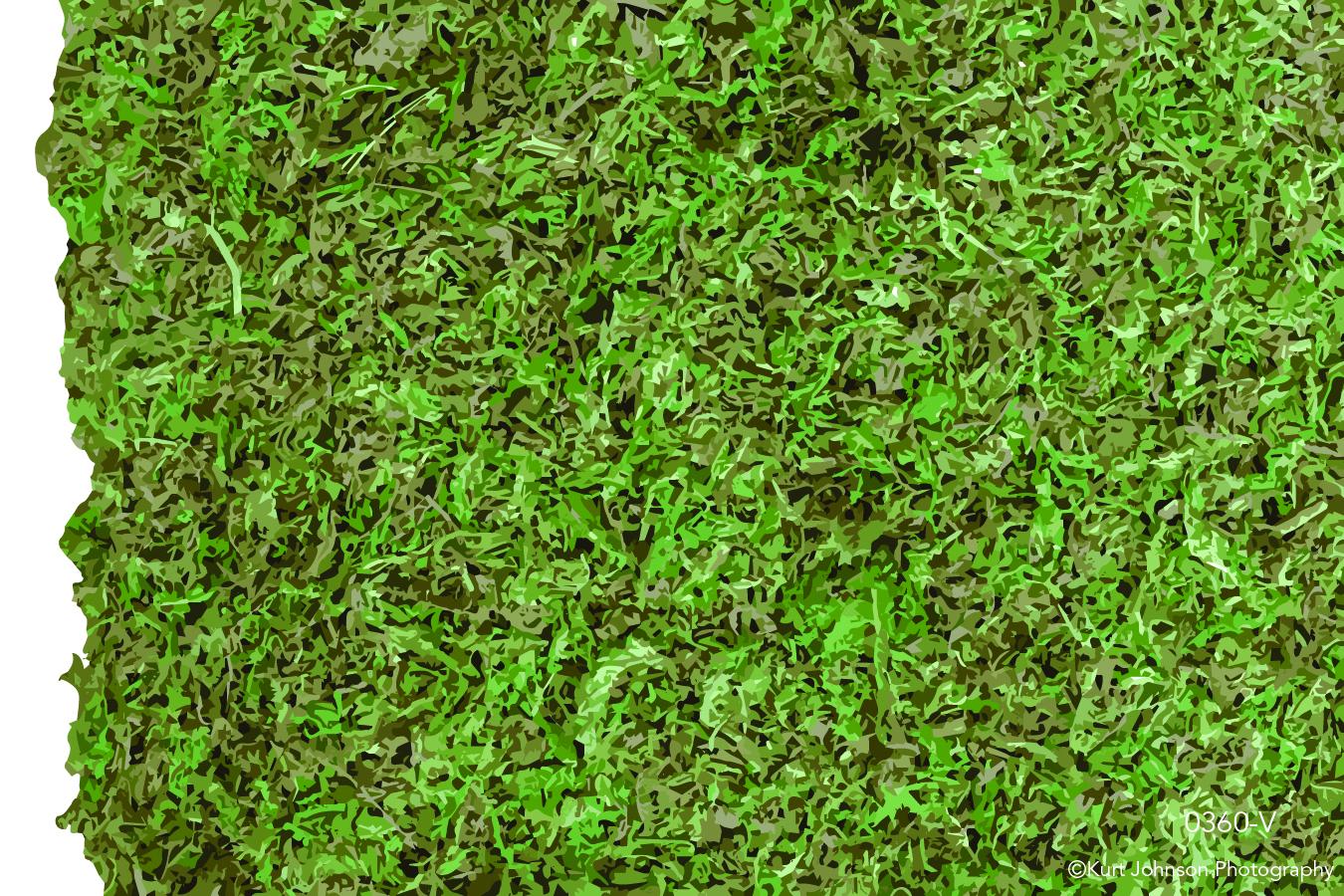 green moss living wall texture pattern grass close up macro detail vector
