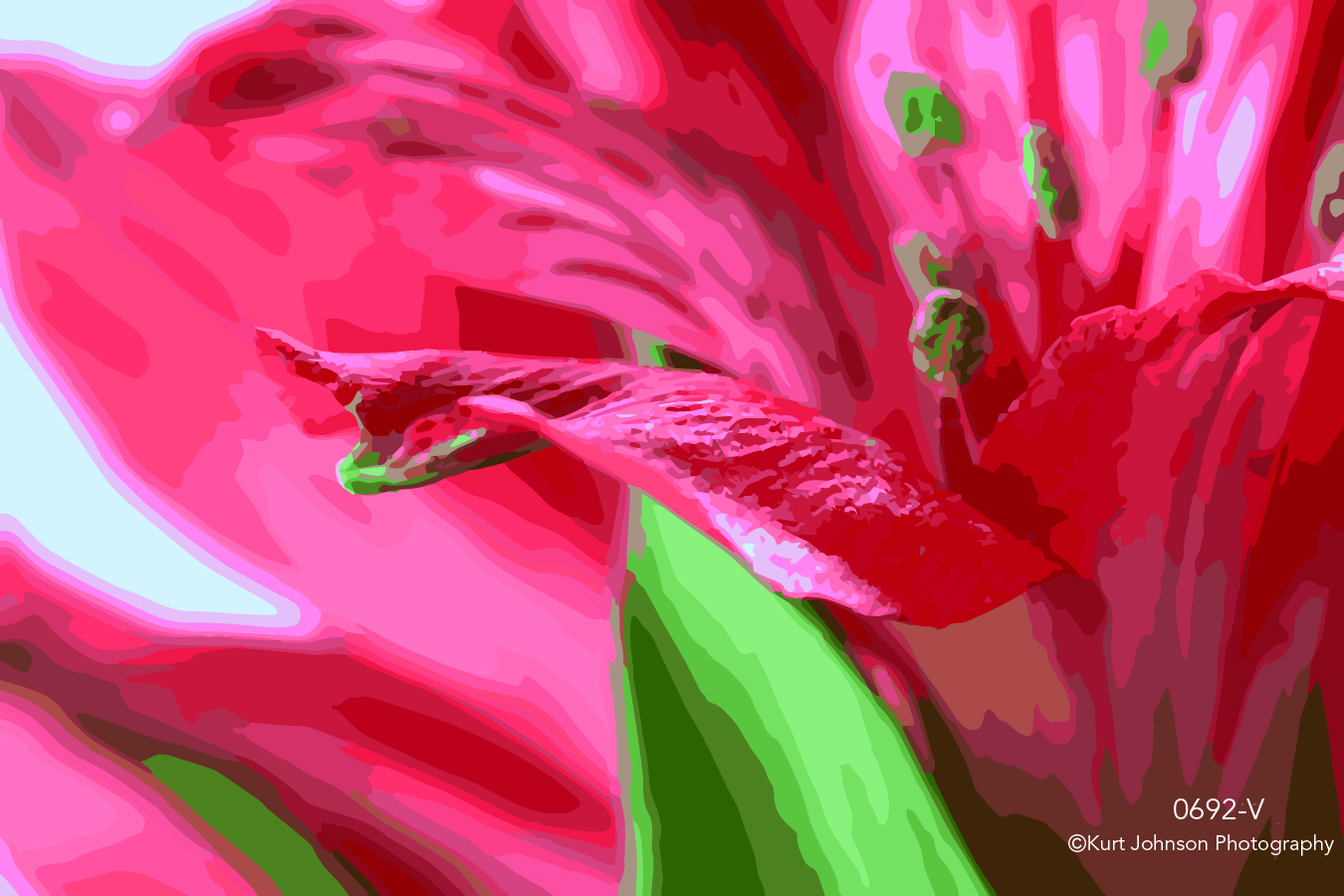 red flower lily macro botanical close up details vector