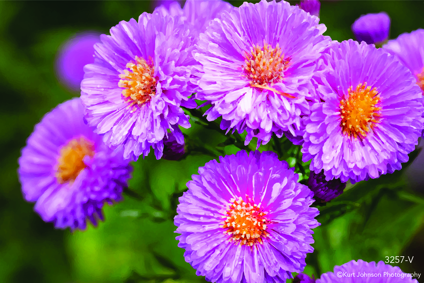 pink purple flowers field close up macro detail botanical botanicals garden vector
