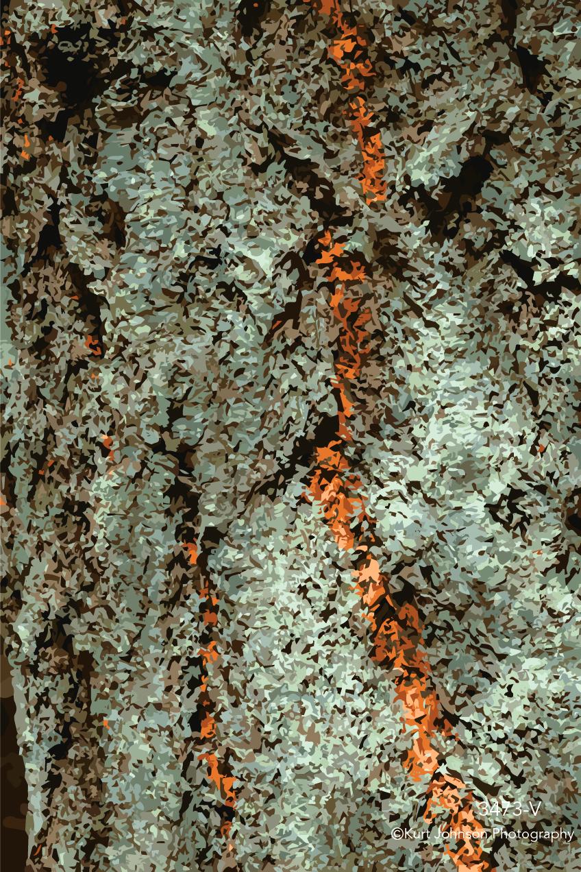 tree bark texture pattern gray orange vector