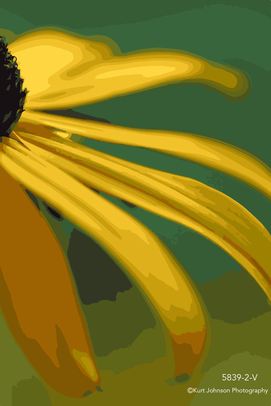 yellow flower petals petal close up macro botanical detail vector black eyed susan