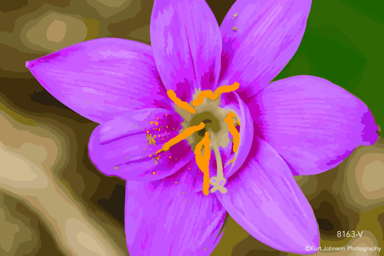 pink flower botanical close up macro vector