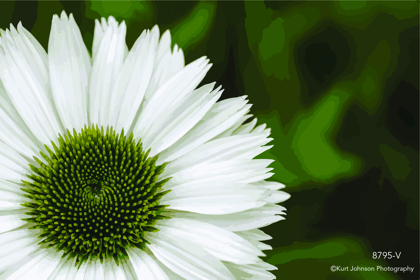white flower close up detail macro vector