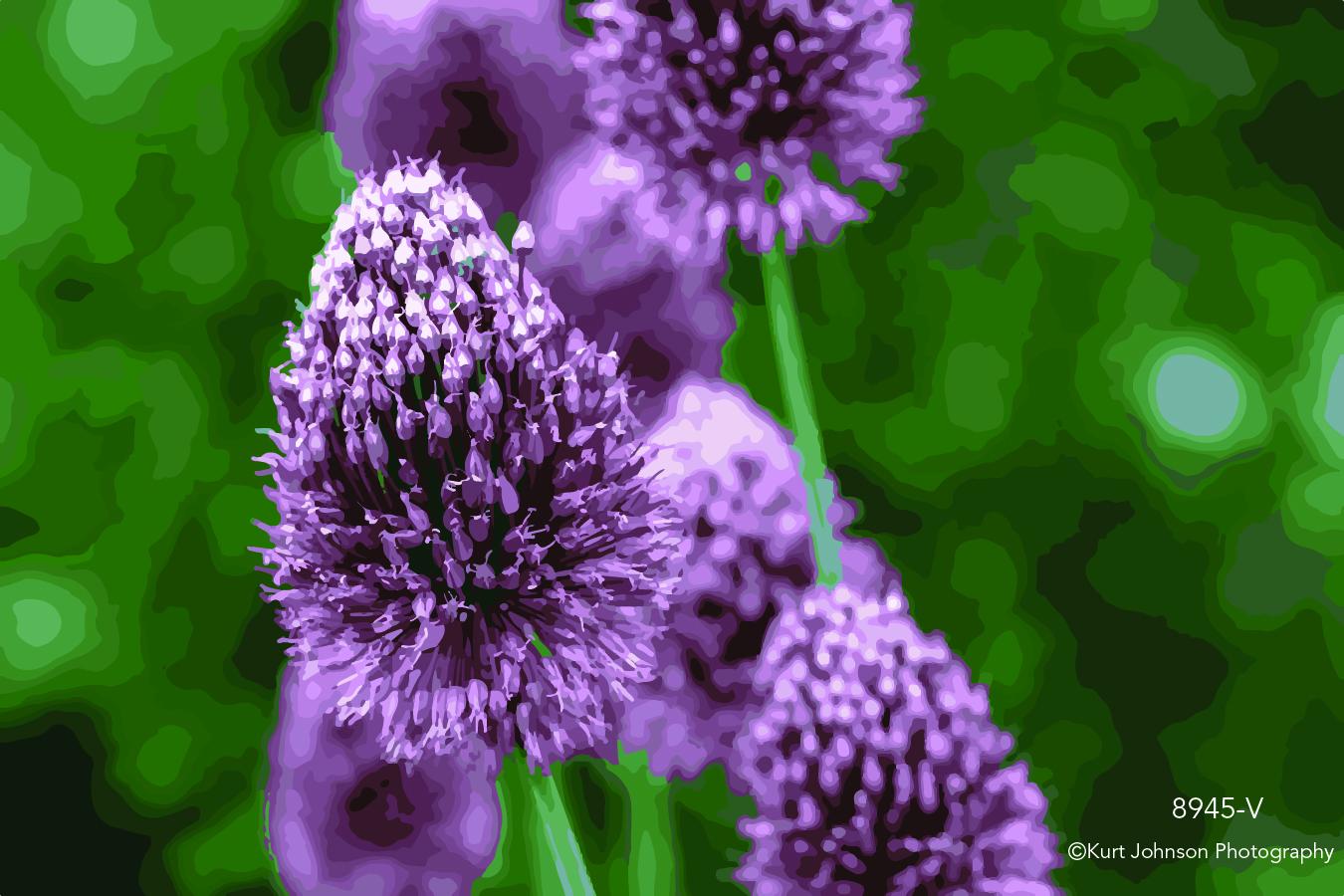 purple violet flower botanical  closeup macro detail vector