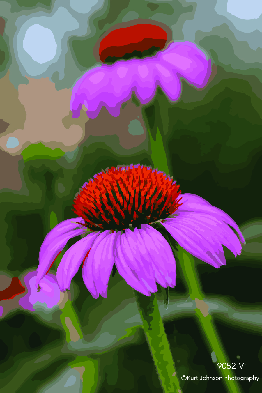 pink coneflower flower wildflower detail close up macro vector