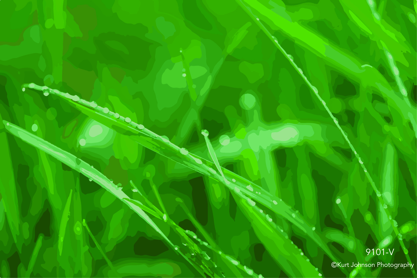 green grass close up macro detail vector rain water drop