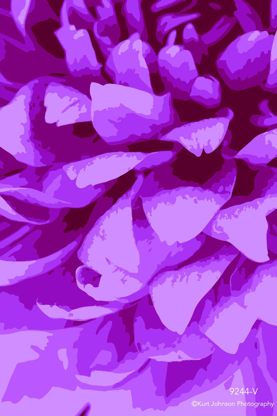 pink flower petals vector close up detail botanical macro