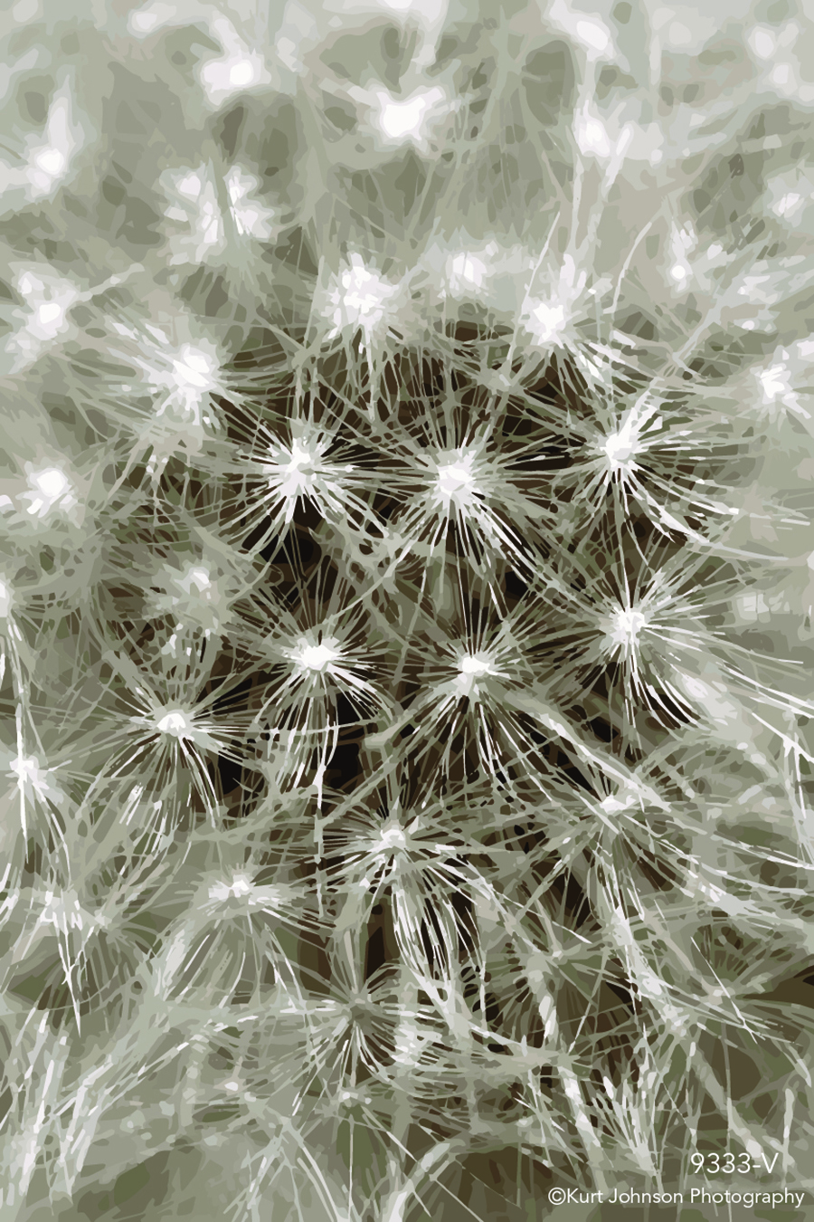 dandelion close up macro flower botanical vector wish black and white soft