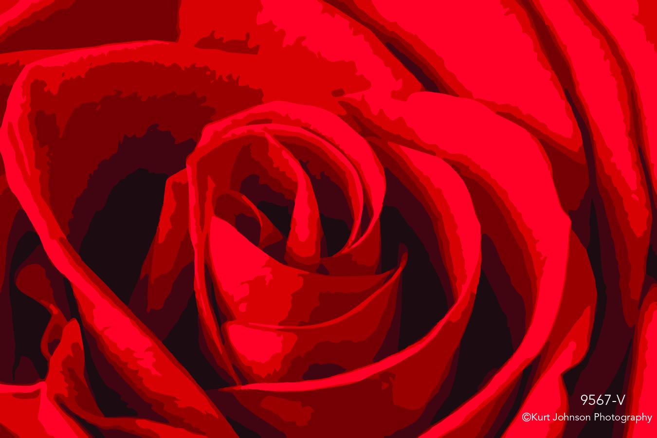 red rose flower botanical macro close up detail vector pattern