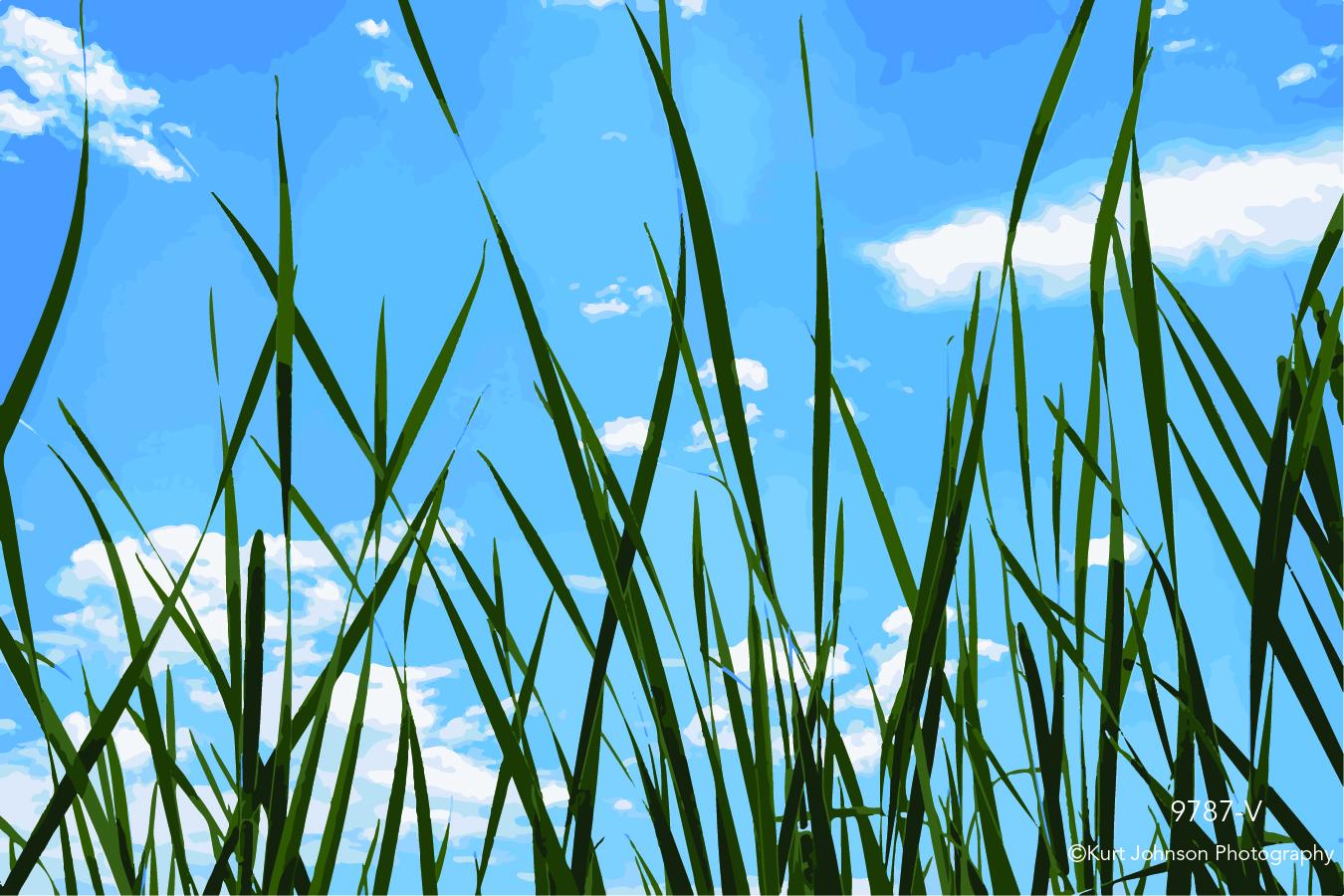 blue sky clouds green grass grasses vector