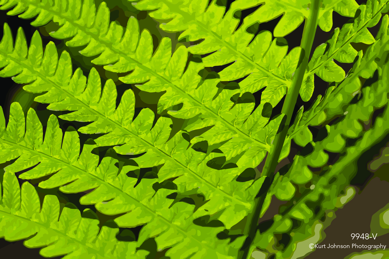green fern leaves grasses texture detail close up vector lines