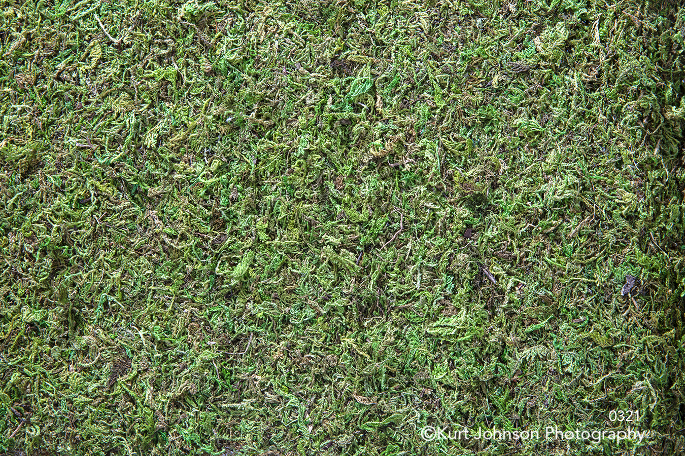 green moss macro detail living wall grass grasses