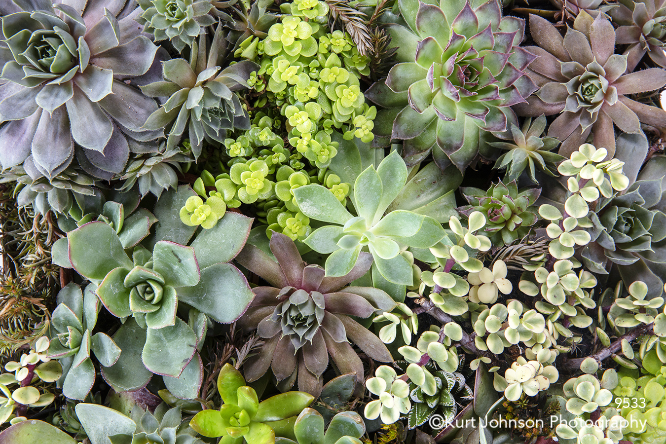 green succulent succulents plants vegetation macro detail living wall grass grasses