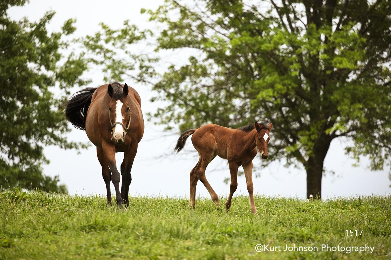 brown horse horses pony green grass grasses tree wildlife animal cute children's art nature children farm field
