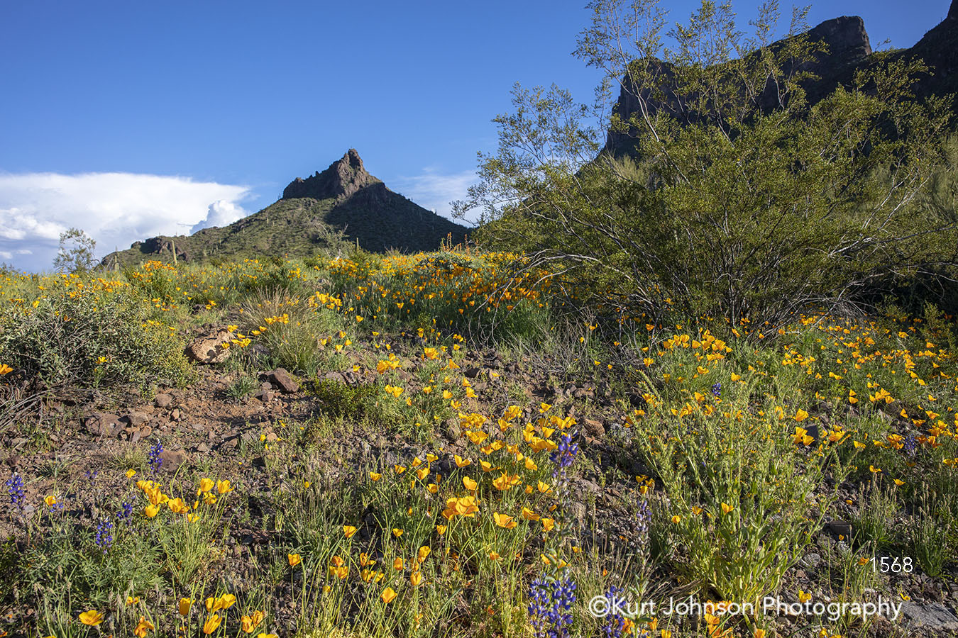 southwest desert botanical garden yellow flowers field mountain