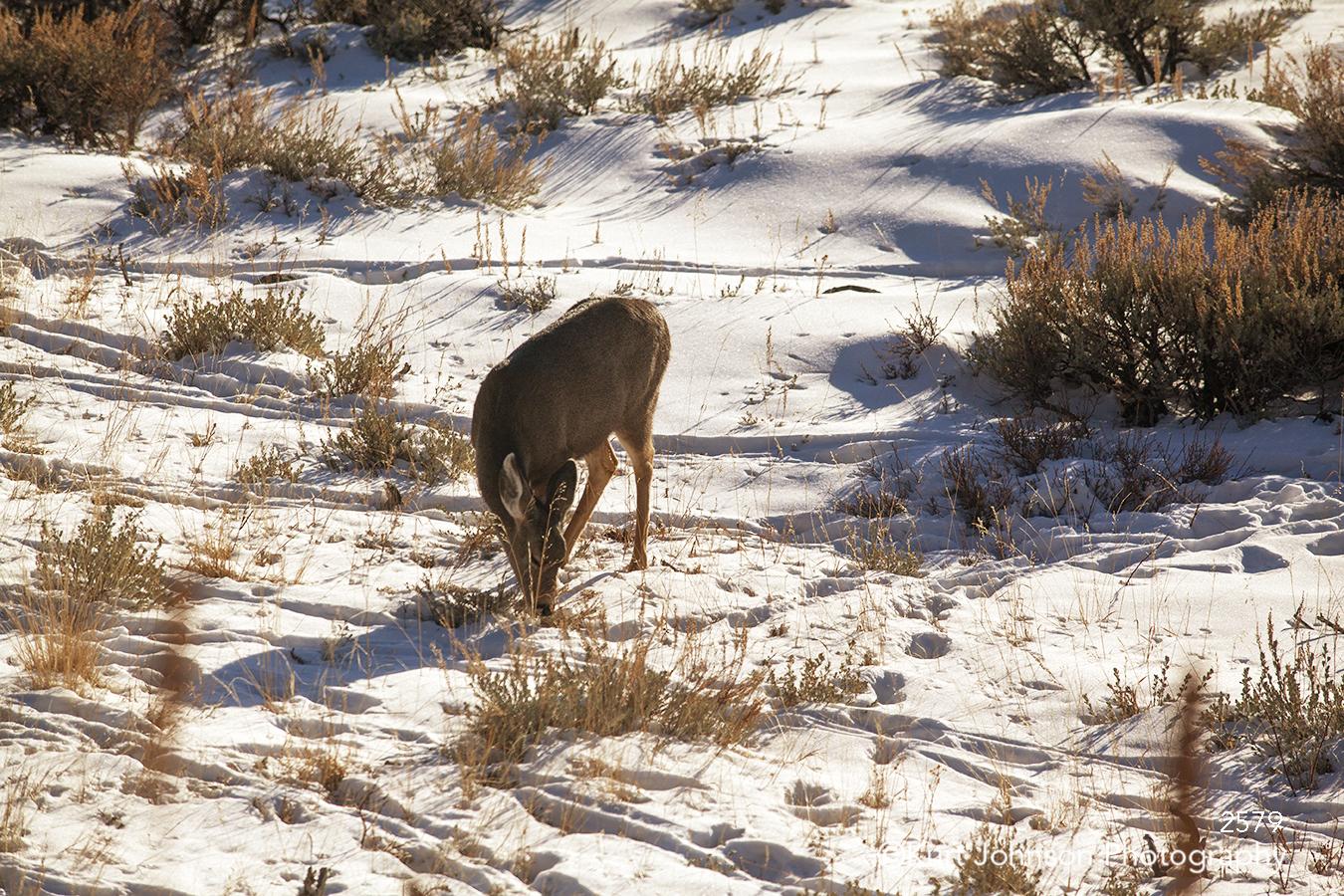 brown deer animal wildlife field winter snow landscape children cute children's art