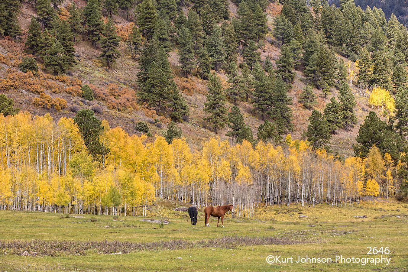colorado landscape trees horse horses wildlife animals green grass field farm