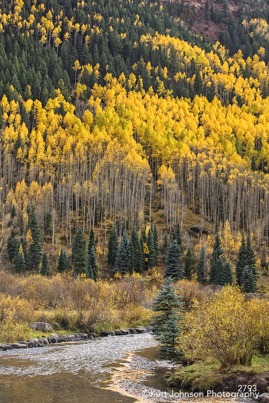 yellow green trees field hill mountains colorado landscape